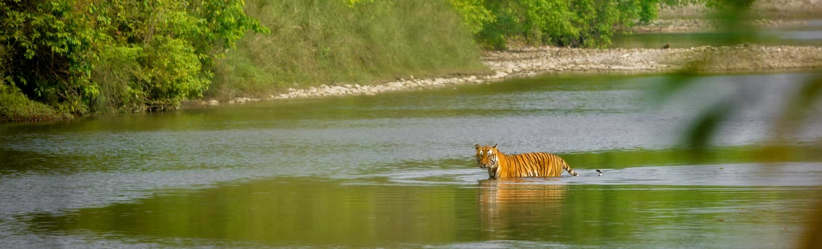 Bardiya National Park tour package